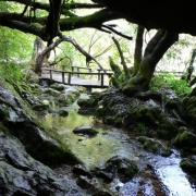 Springs Vevchani 1