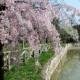 1170101-primavera-300x168