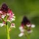 riserva-GHIrardi-orchide-foto-GuidoSardella-1