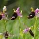 riserva ghirardi orchidea Foto G. Sardella