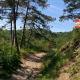 Sentiero-CAI-644-anello-Parco-di-Vezzano-Pecorile-Casola-di-Canossa-1100x635d