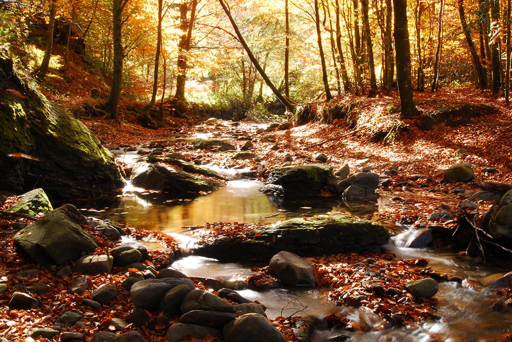 autunno-1024