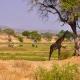 FOTO-TANZANIA-7-1024x680
