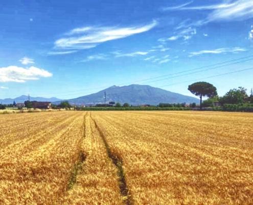 Itaca Campania Felix 2021